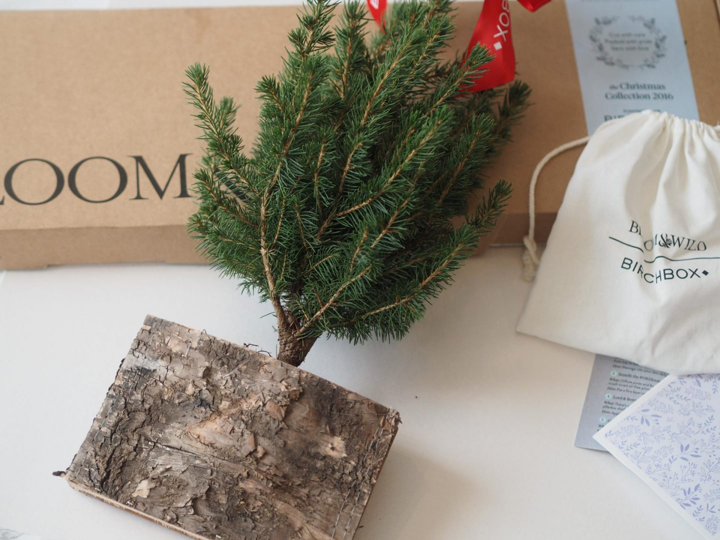 Mini Birch Tree with Bloom & Wild and Birchbox for December Collaboration