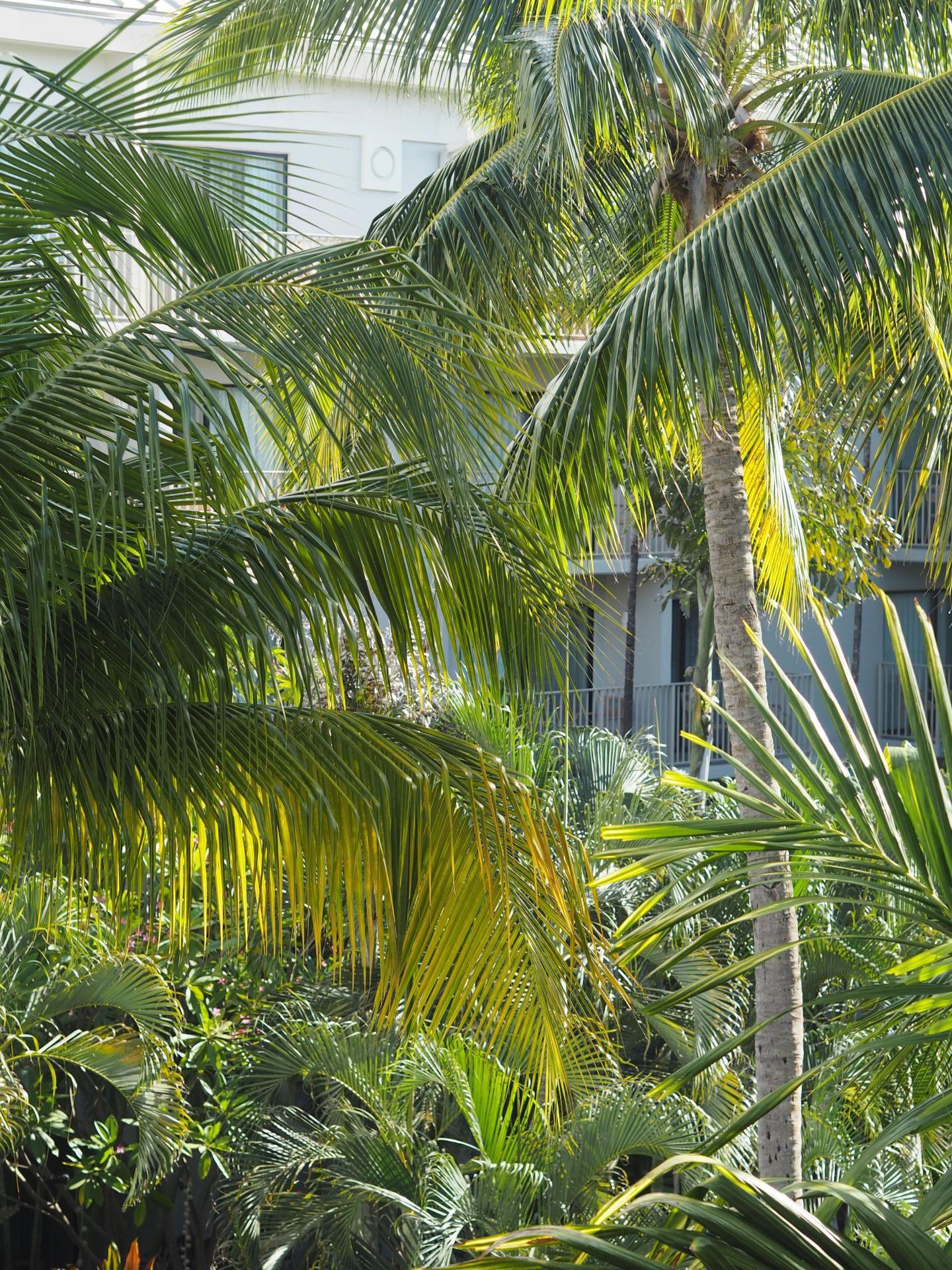 Cayman Islands - Trees Cayman Brac - Le Soleil d'Or