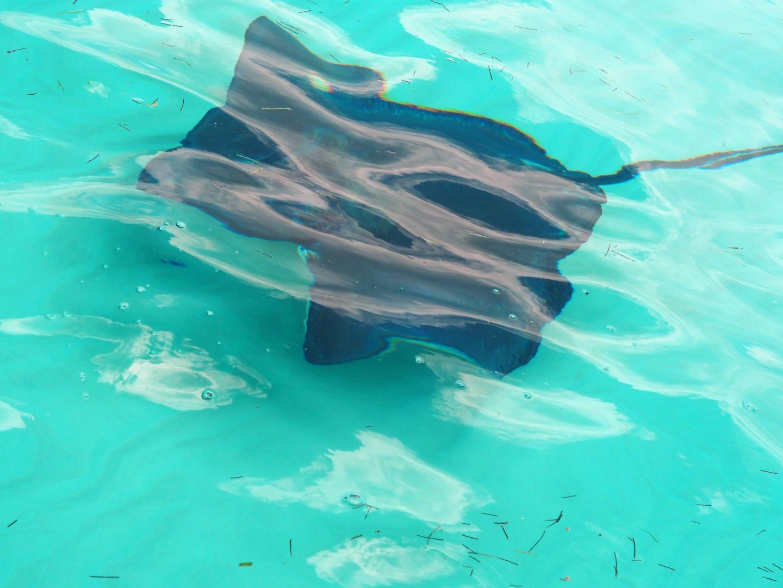 Cayman Brac - Le Soleil d'Or Cayman Islands - fish