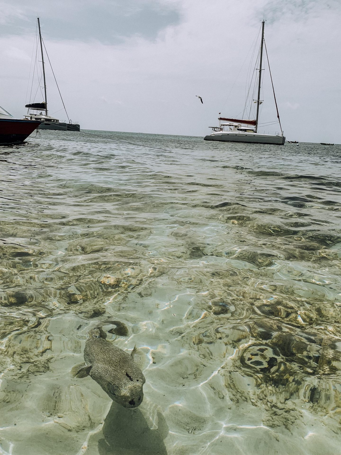 Swim with Sea Turtles in Tobago Cays